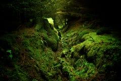 Bosque profundo Foto de archivo libre de regalías