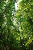 Bosque profundo Fotografía de archivo libre de regalías