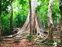 Bosque profundo Fotografía de archivo