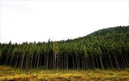 Bosque que agita imagen de archivo