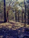 Bosque que camina bonito imagenes de archivo