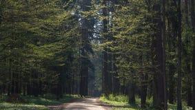 Bosque que entra del camino de tierra Fotos de archivo