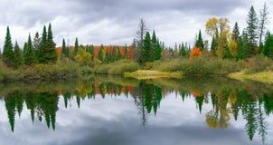 Bosque que refleja en agua Imágenes de archivo libres de regalías