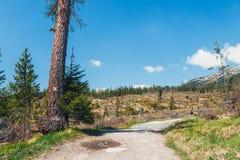 Bosque quebrado después del viento de la montaña Imagen de archivo libre de regalías