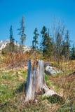 Bosque quebrado después del viento de la montaña Fotografía de archivo