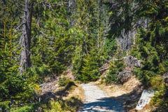 Bosque quebrado después del viento de la montaña Imágenes de archivo libres de regalías