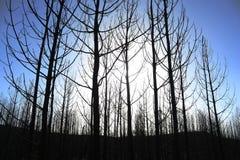 Bosque quemado Foto de archivo