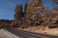 Bosque quemado Foto de archivo libre de regalías