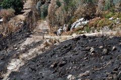 Bosque quemado Imagen de archivo libre de regalías