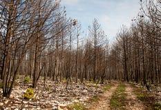 Bosque quemado Imagenes de archivo