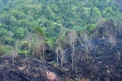 Bosque quemado en la montaña Fotos de archivo libres de regalías