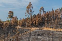 Bosque quemado en Portugal Bosque foto de archivo libre de regalías