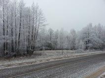 Bosque Rahachow del invierno Fotos de archivo libres de regalías