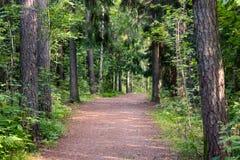 bosque recreativo en Finlandia, bosque municipal imágenes de archivo libres de regalías
