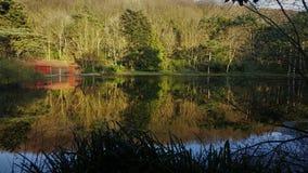 Bosque reflejado en el lago Fotografía de archivo