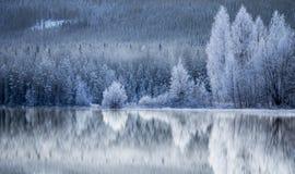 Bosque reflejado en el lago congelado Fotografía de archivo