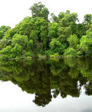 Bosque reflejado en una laguna en el Amazonas Fotografía de archivo