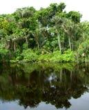 Bosque reflejado en una laguna en el Amazonas Imágenes de archivo libres de regalías