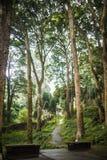 Bosque reservado y claro en el oeste de China Foto de archivo libre de regalías