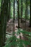 Bosque retroiluminado Fotos de archivo libres de regalías