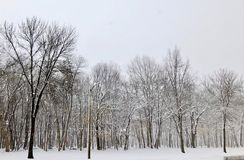 Bosque revestido da neve fotografia de stock royalty free