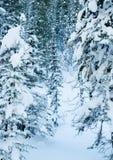 Bosque revestido de la nieve del invierno Imagen de archivo