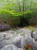 Bosque rocoso Imágenes de archivo libres de regalías