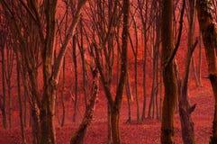 Bosque rojo imagen de archivo libre de regalías