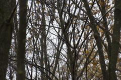 Bosque rumano de madera del otoño en un día lluvioso fotos de archivo