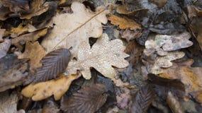 Bosque rumano de madera del otoño en un día lluvioso imagen de archivo
