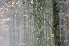 Bosque rumano del otoño en un día lluvioso Fotos de archivo libres de regalías