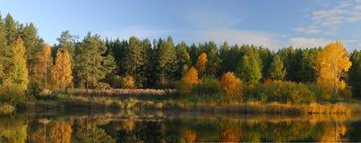 Bosque ruso Fotografía de archivo