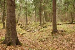 Bosque ruso en verano fotografía de archivo libre de regalías