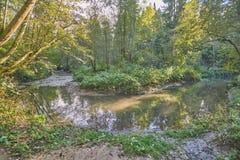 Bosque ruso en verano imagen de archivo