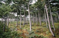 Bosque salvaje Fotos de archivo