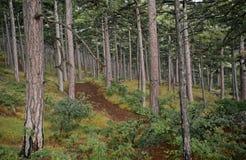 Bosque salvaje Fotografía de archivo