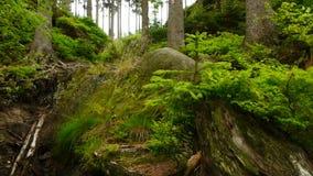 Bosque salvaje almacen de metraje de vídeo