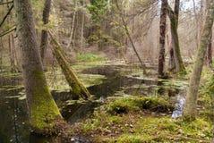 Bosque salvaje Foto de archivo