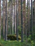 Bosque salvaje Fotos de archivo libres de regalías