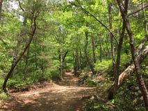 Bosque salvaje Fotografía de archivo libre de regalías