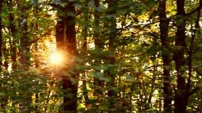 Bosque salvaje de Balcanes en el movimiento almacen de metraje de vídeo