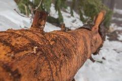 Bosque salvaje del inicio de sesión Foto de archivo libre de regalías