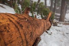 Bosque salvaje del inicio de sesión imagen de archivo libre de regalías