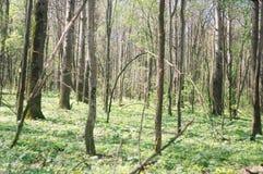 Bosque salvaje imagenes de archivo