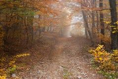 Bosque salvaje en Ucrania Fotos de archivo