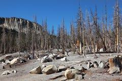Bosque seco imagen de archivo libre de regalías