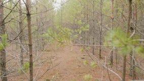 Bosque seco del otoño en Rusia almacen de metraje de vídeo