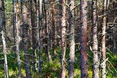 Bosque seco viejo fotografía de archivo libre de regalías