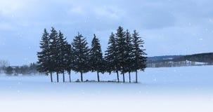 bosque sempre-verde de 4K UltraHD em uma paisagem nevado filme