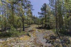 Bosque septentrional Karelia, Rusia, junio Fotografía de archivo